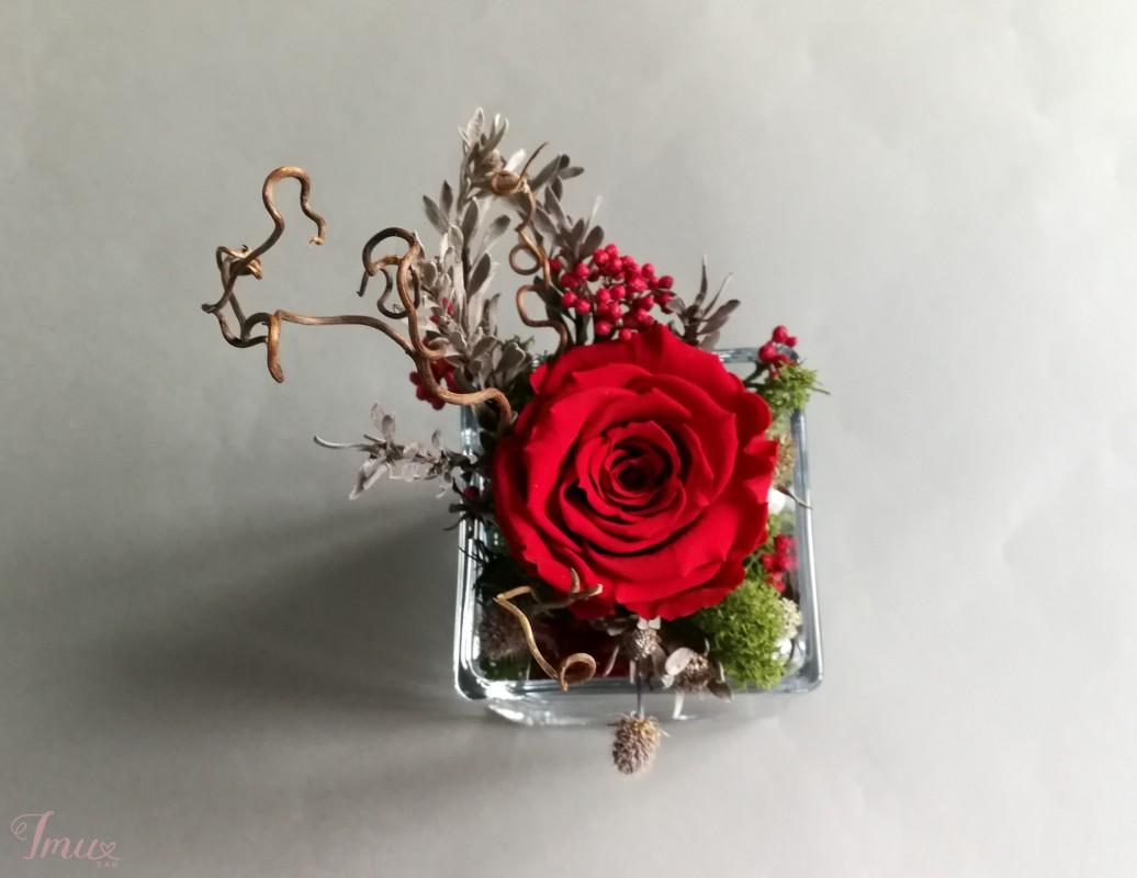 imusau.lt   parduodama Mieganti rožė